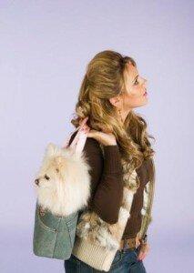 Перевозка щенка померанца