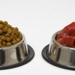 dog-food-meat-kibble