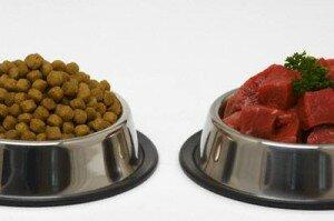 Как правильно кормить померанского шпица?